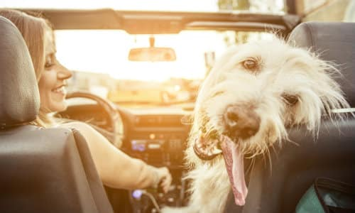 a happy dog riding in a car next to a woman driver as the sun shines bright