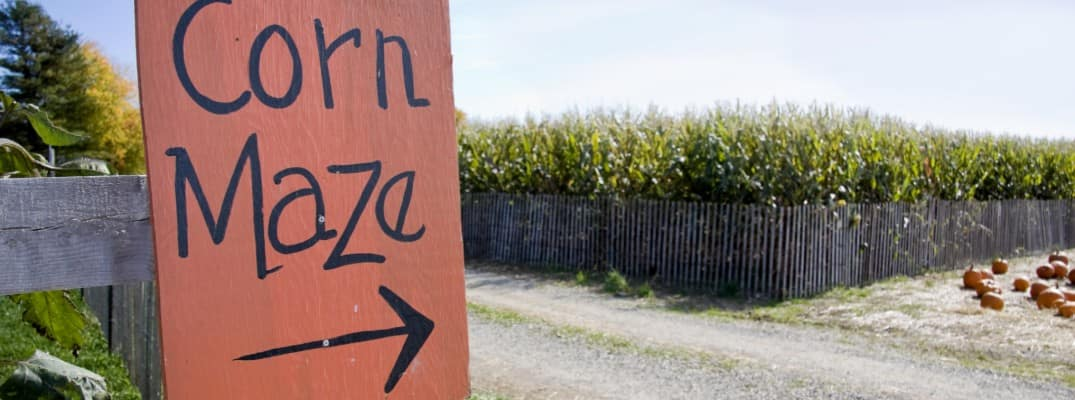 an orange sign with the words corn maze and an arrow drawn on pointing to a nearby cornfield