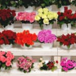 rows of colorful flower assortments, bouquets, and vases set up inside a florist shop
