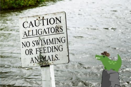 A sign warns against swimming due to alligator danger. A small cartoon alligator wearing a cowboy hat is perched on a rock nearby.