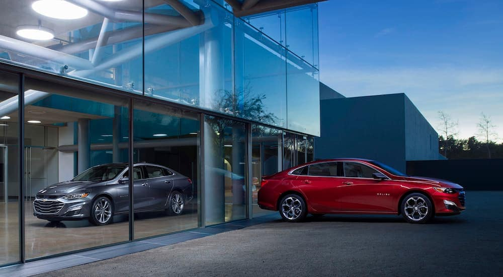 A grey and a red 2019 Chevy Malibu are at a dealership with large glass windows.