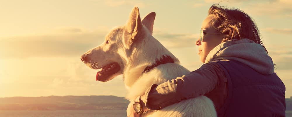 Young woman with her arm around a white shepherd dog at sunset