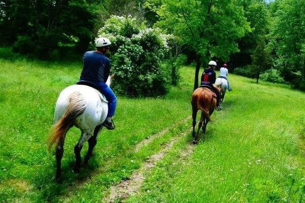 Horse Back Riding on a trail
