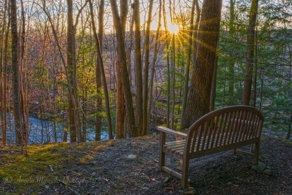 Moonbeams Preserve bench with a view