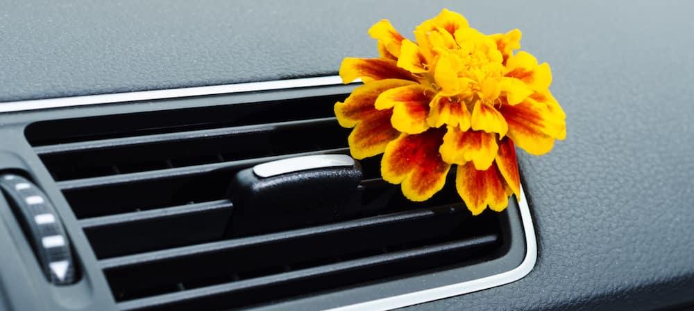 Flower in car air vent