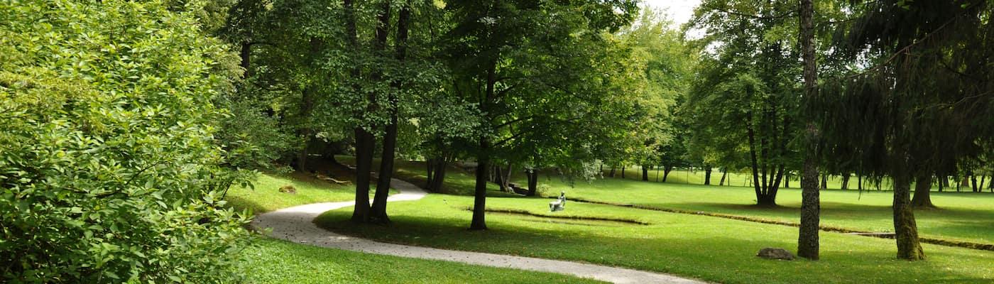Tree-lined walking path in public park