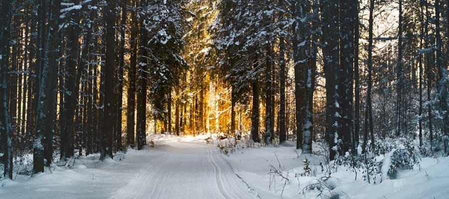 Snow Pathway Between Trees during Winter