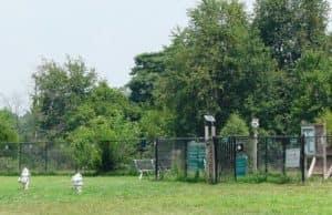 an image of a dog park